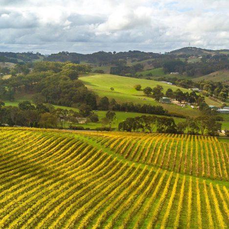 Adelaide-Wine-Region-Feature