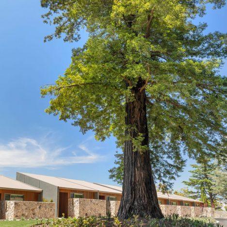 Sequoia-Tree-Lodge-Outside